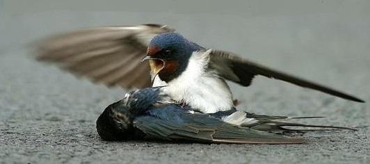 kuşun feryadı